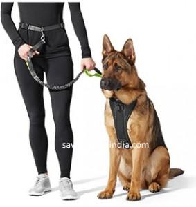 basics-dog-leash